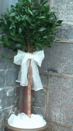 trees for outside the church or reception